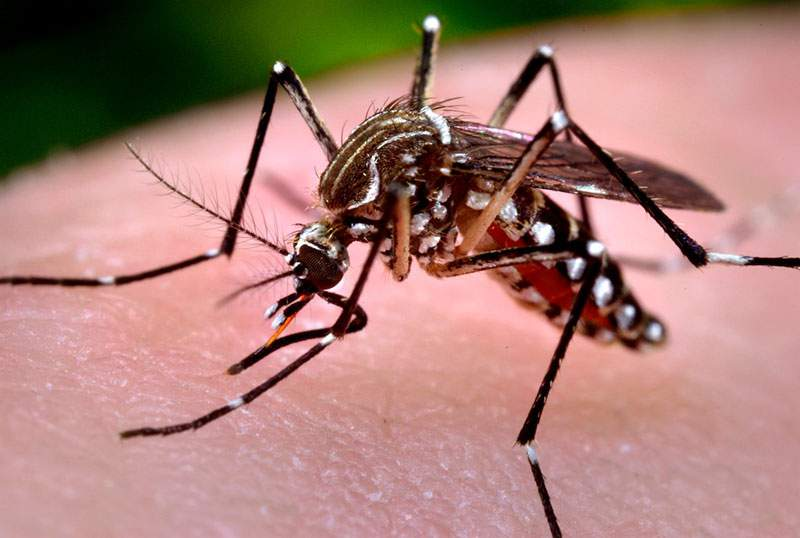 byoformula-mosquito-dengue-zika