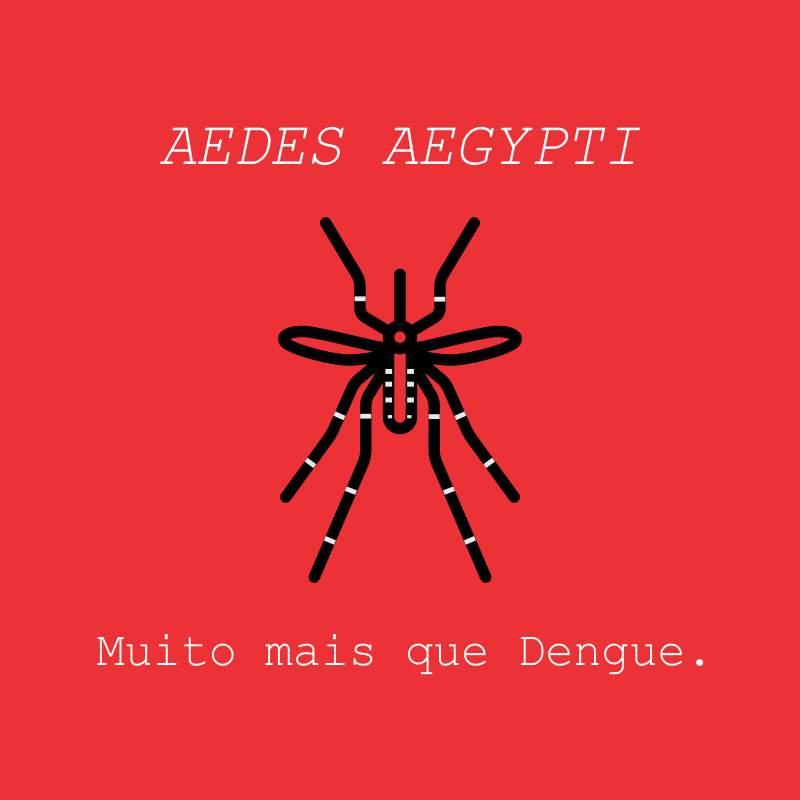 dengue.jpg